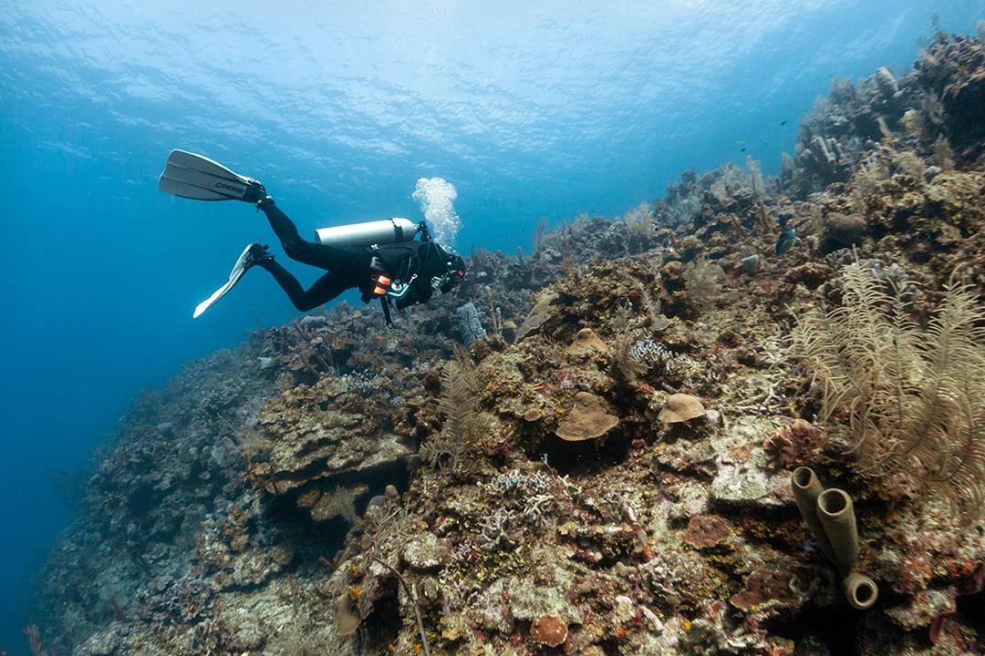 Scuba Diver on reef wall, Roatan, Caribbean Sea