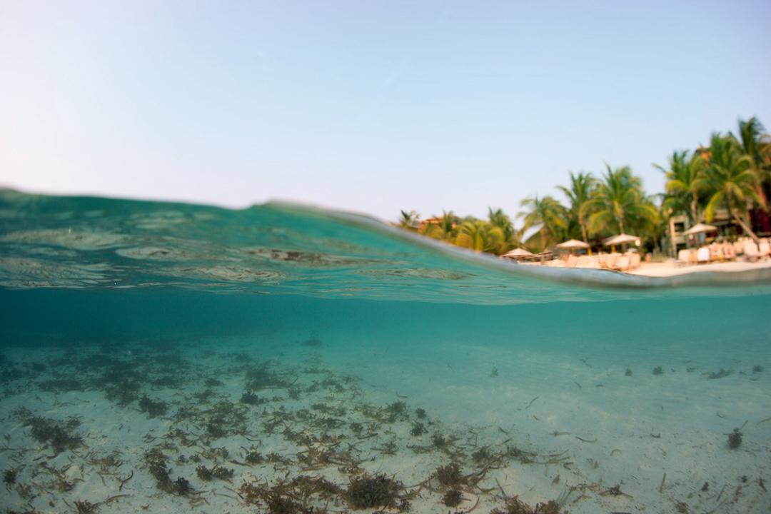 Tropical Sea, palm trees and beach, Caribbean, Roatan, Honduras