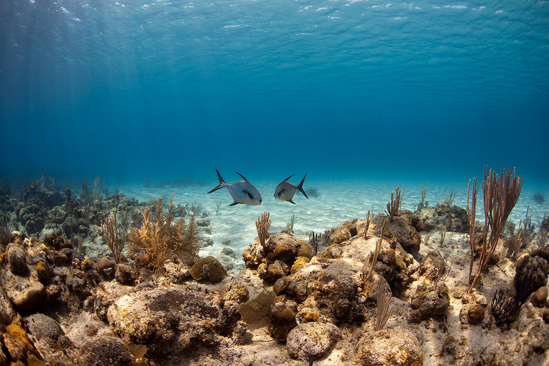 Reef life, Roatan, Caribbean Sea