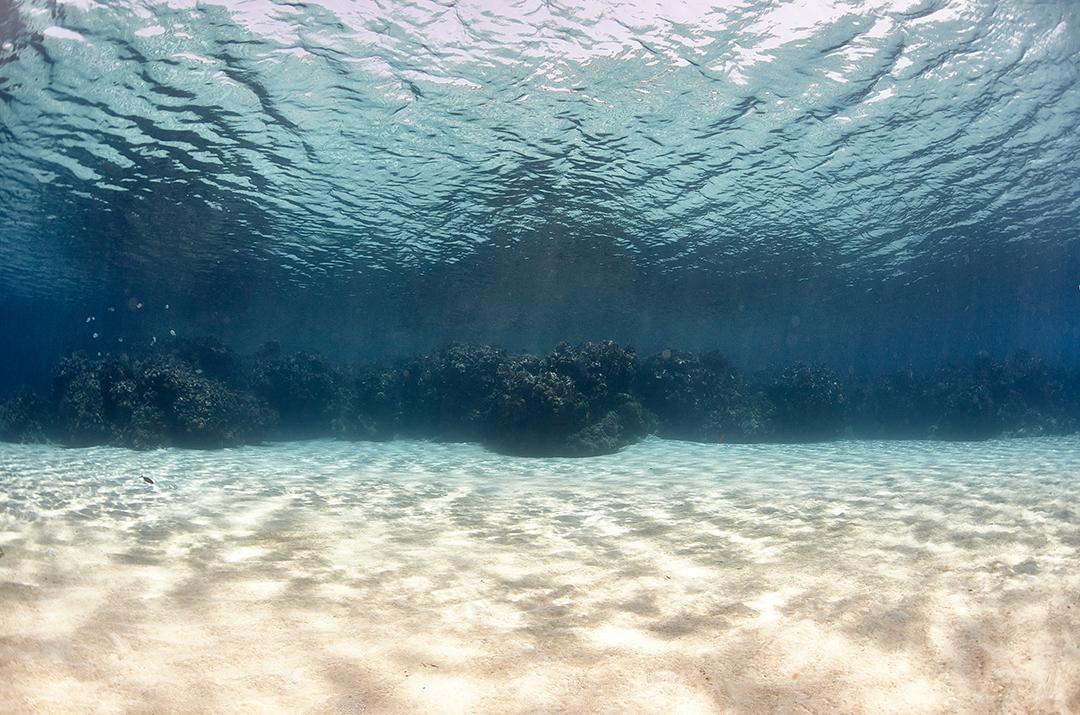 Reef, Caribbean Sea, Roatan, Honduras