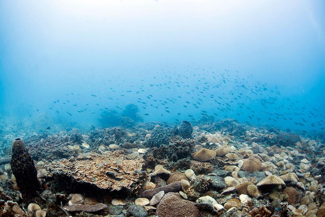 Reef Life, Koh Tao, Thailand