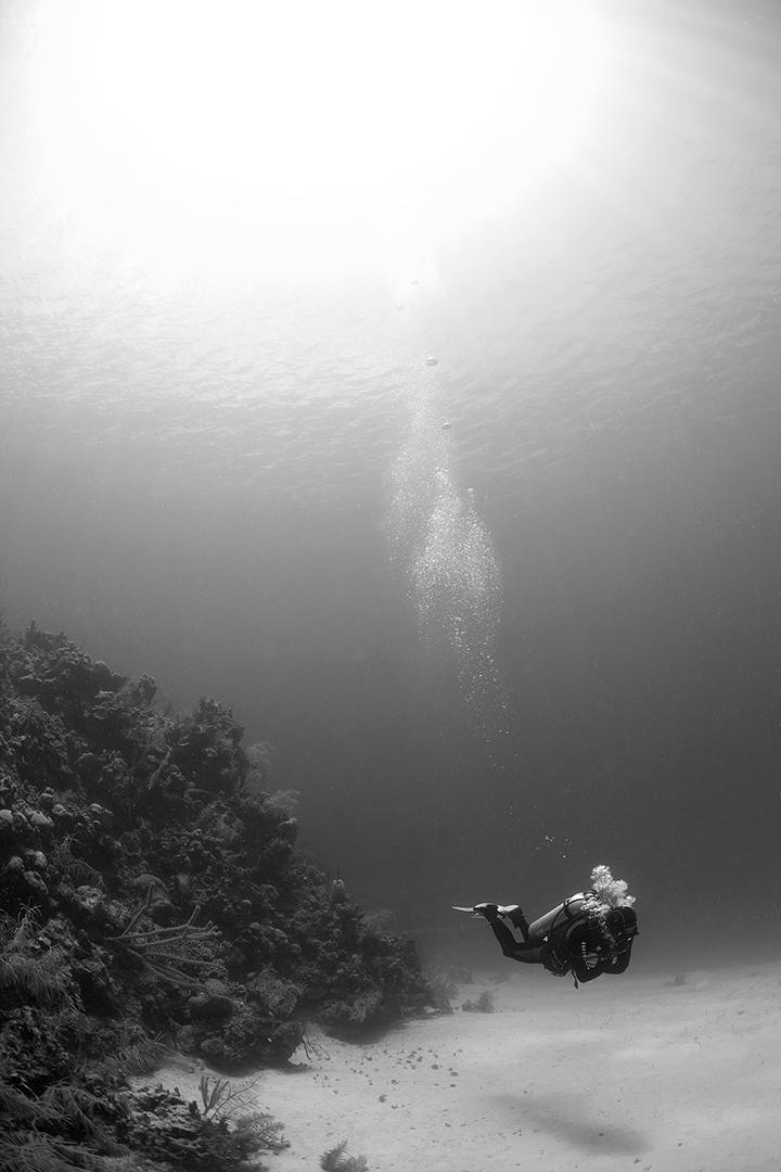 Scuba Diver in the Caribbean